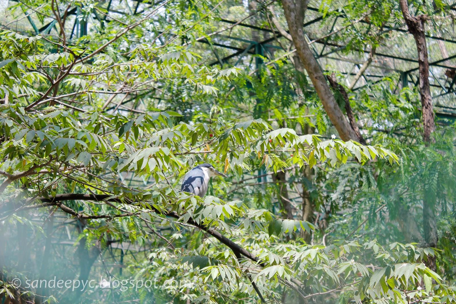 birds at BNP