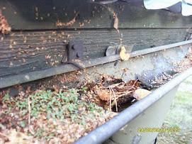 Piha- ja puutarhapalvelumme puhdistaa rännejä eri sopimuksesta korvausta vastaan. Lähetä tiedustelu