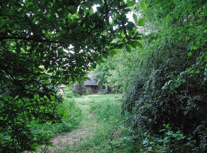 aanleg voedselbosje, voedselbosje, foodforest, permacultuur