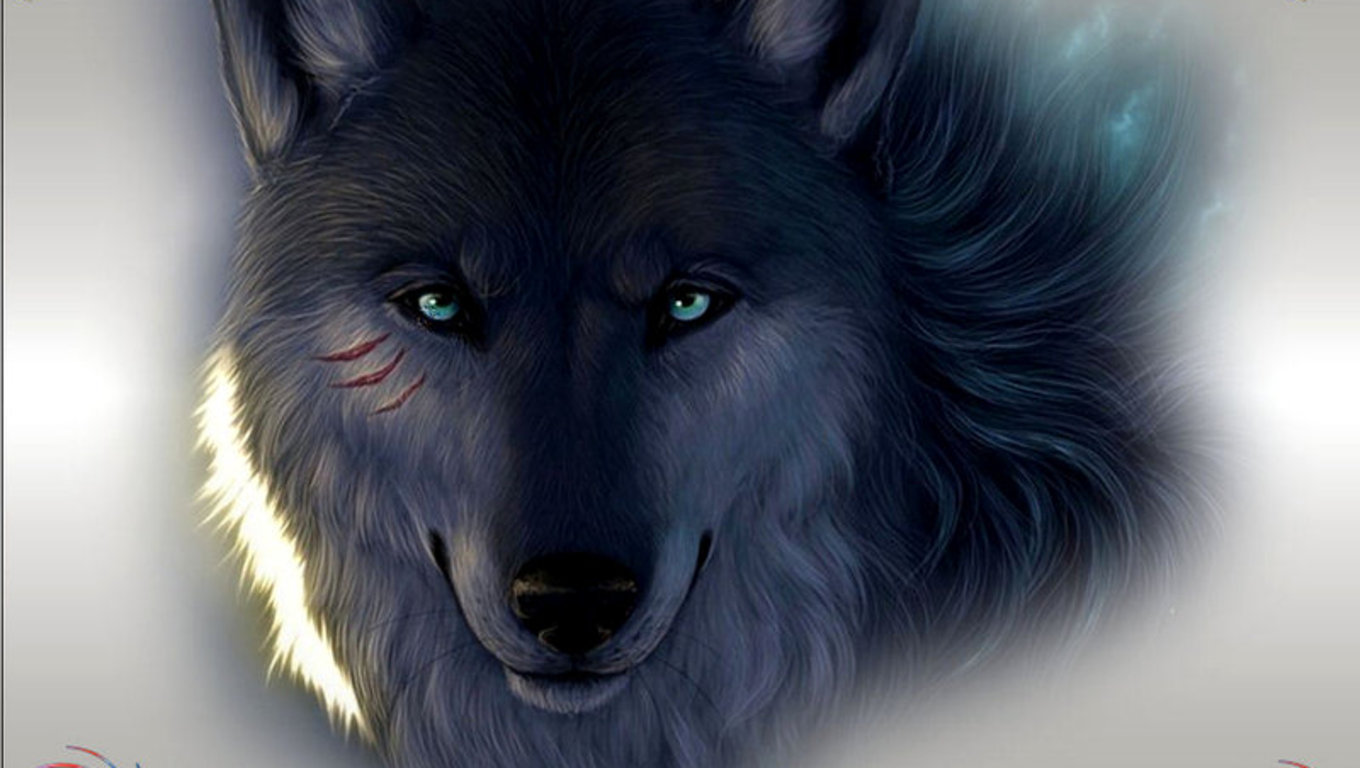 wolf in black and - photo #29