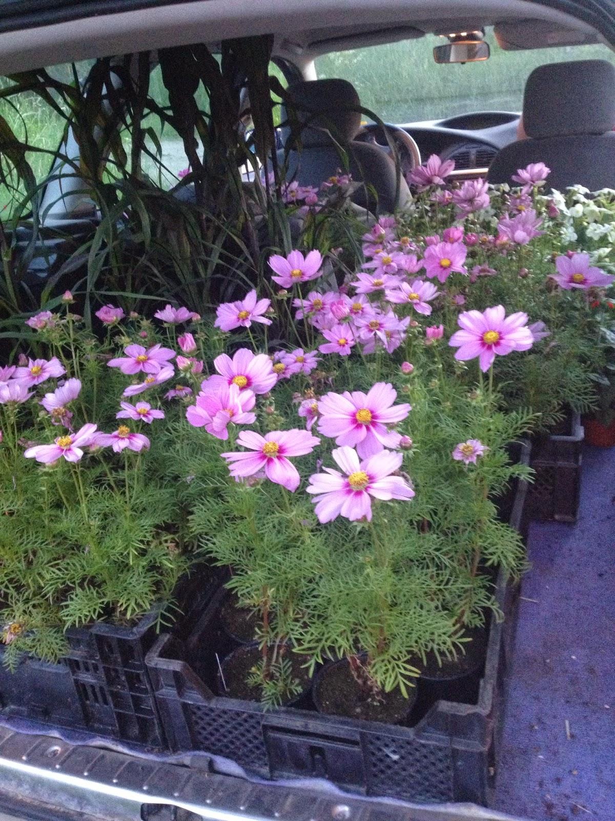 Lill hasta trädgård