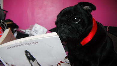 Ginny the book reading pug