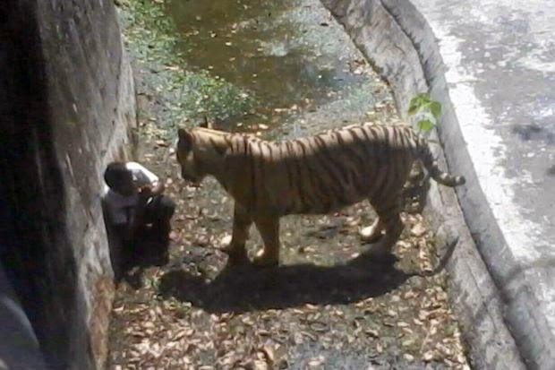 harimau baham pemuda di new delhi
