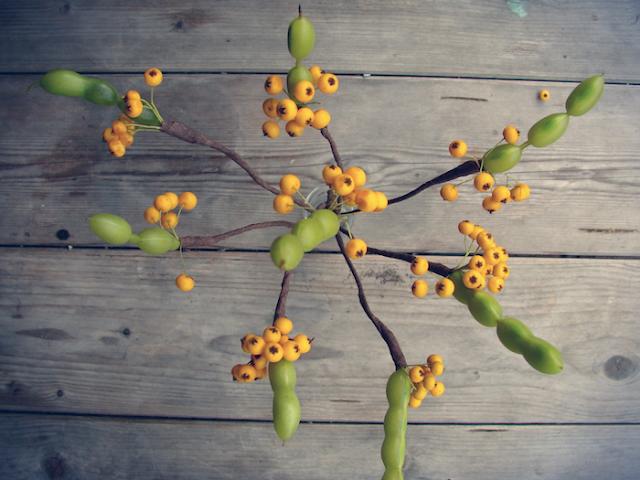 fai da te, decorazioni con semi, bacche e baccelli, autunnali