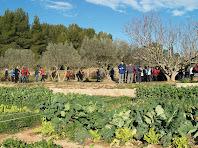 Cols i oliveres a la Finca Rebanyà