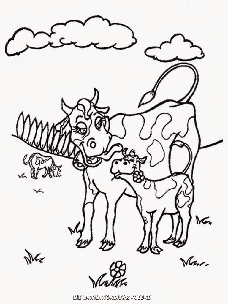 gambar mewarnai sapi ternak
