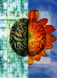 The left side of the brain is covered in computer code, while the right side is a blossoming flower.