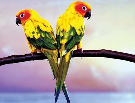 Parrot The Beautiful Bird