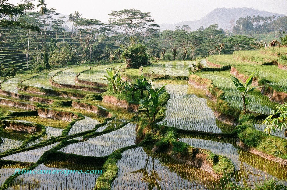 Rice Terrace of Sidemen