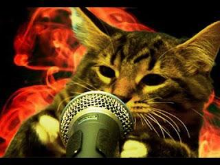 funny cat picture cat rapper wit mic