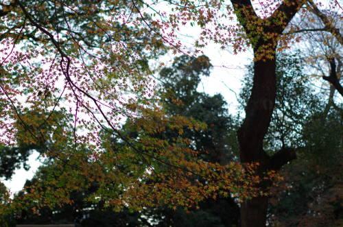 2014年下鴨神社・糺の森の紅葉