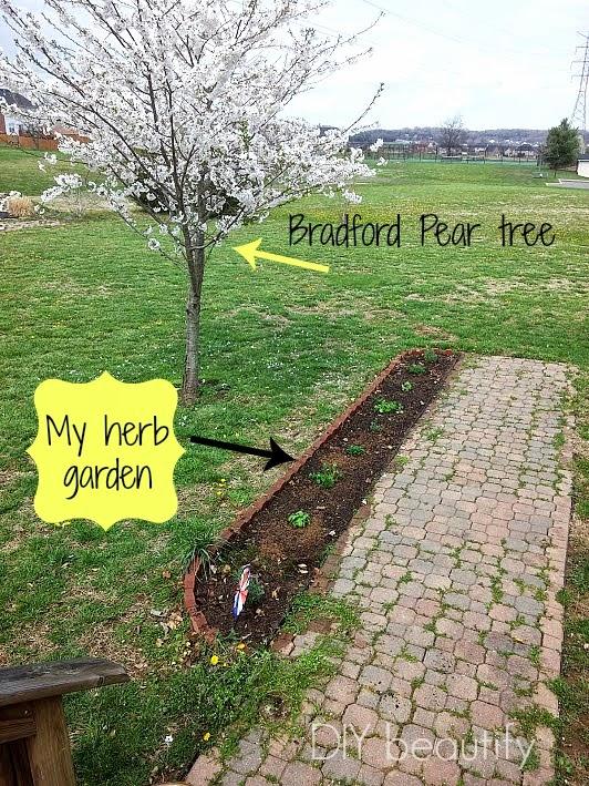 Herb Garden www.diybeautify.com