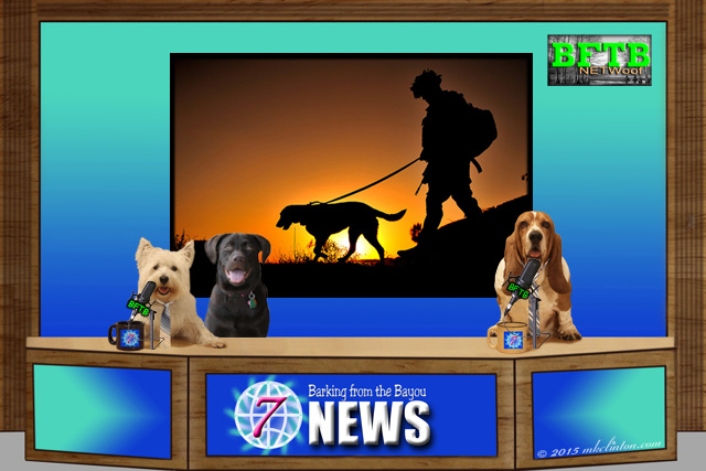 BFTB NETWoof News set with military dog in background.