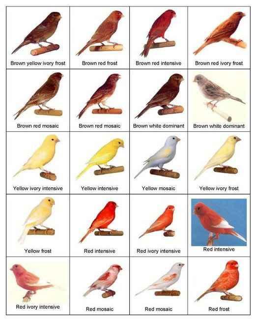 types of birds - gener... Different Kinds Of Birds