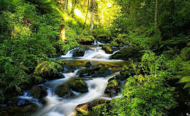 Green Forest Running Water Wallpaper