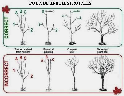 Juanpcachero blog la poda de frutales - Poda de hortensias epoca ...