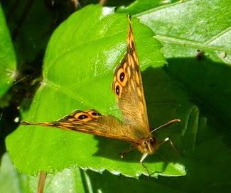 Mariposas en Alicante