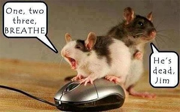 30 Funny animal captions - part 19 (30 pics), funny mouse picture with caption