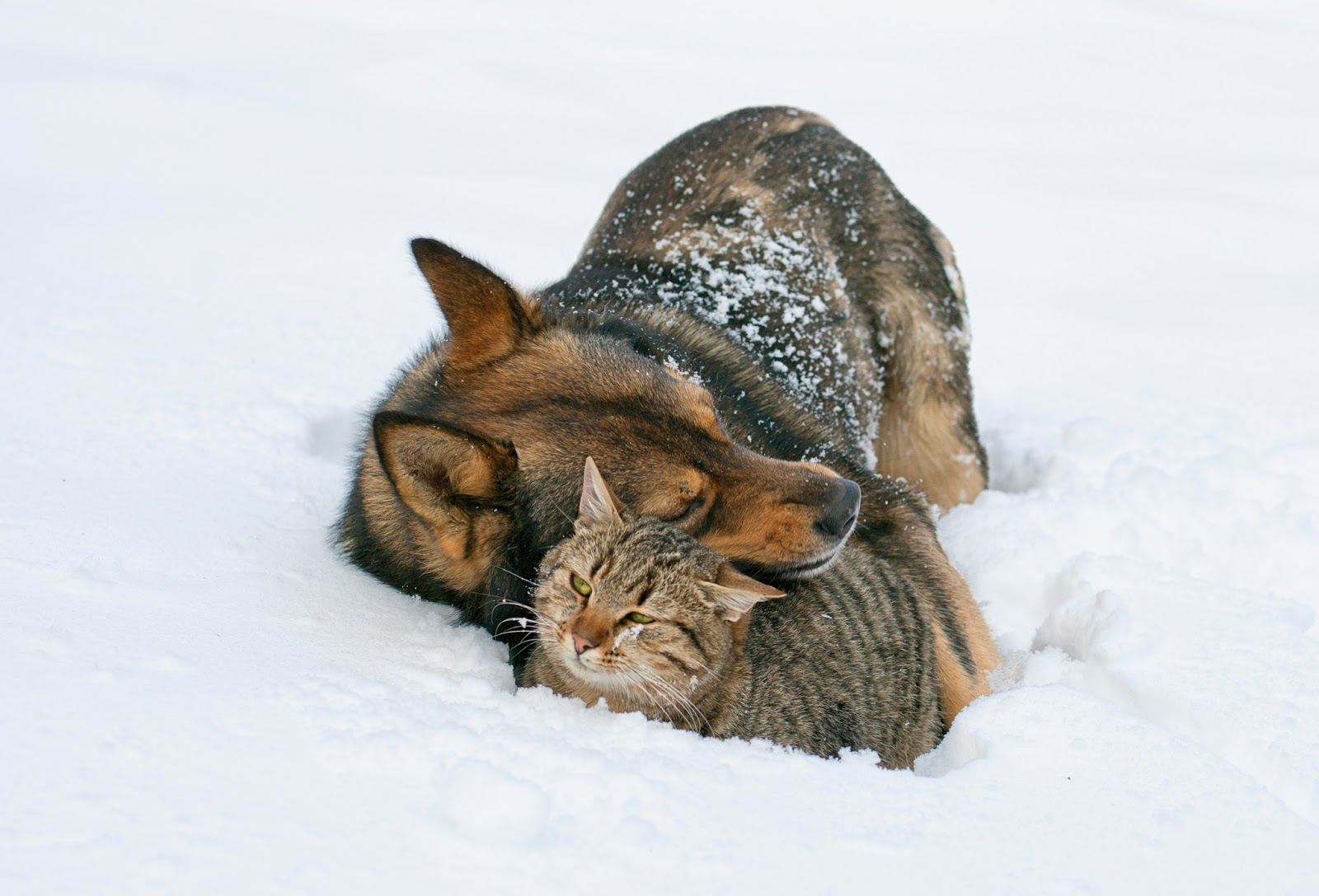 Will A Cat Get Over A Cold On Its Own