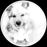 Vores dejlige hund