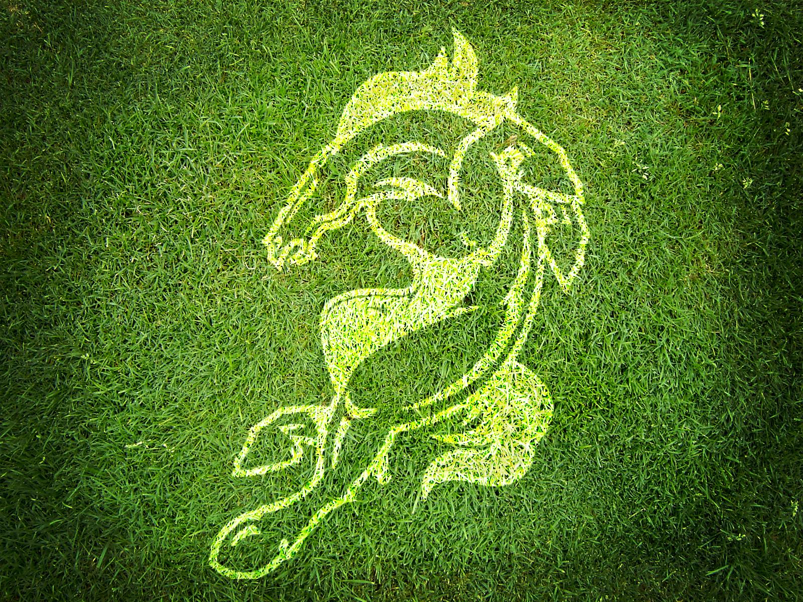 http://3.bp.blogspot.com/--i8EoqyGODw/TnjaONy1yPI/AAAAAAAABNc/pEjjCsO3150/s1600/Broncos_Logo_on_Grass_HD_Wallpaper.Net.jpg