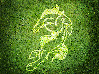 Denver Broncos Logo on Grass HD Wallpaper