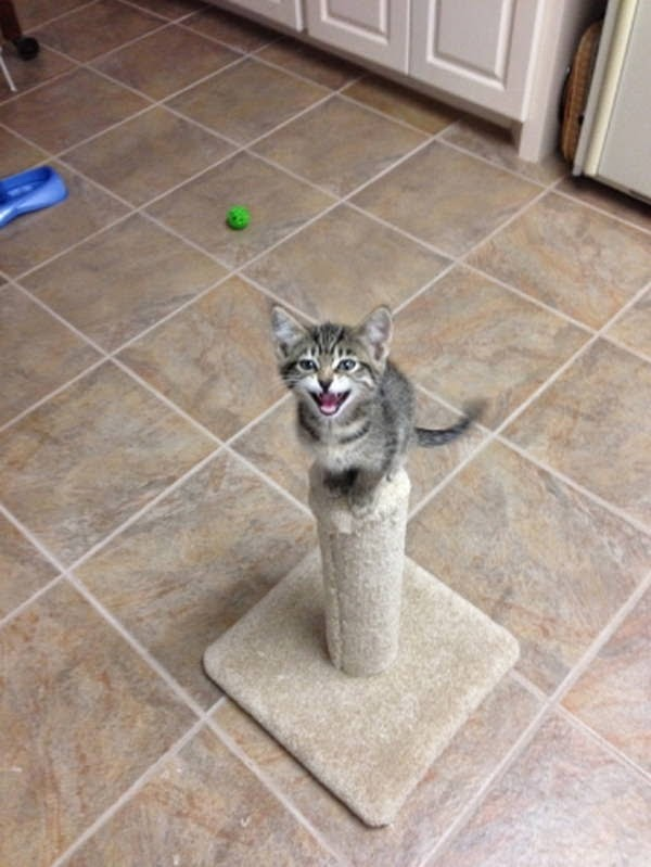 Funny cats - part 101 (40 pics + 10 gifs), funny cat pictures, cat photos