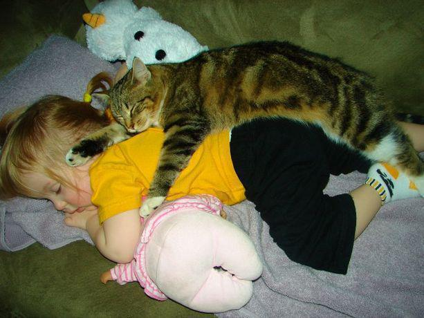 http://3.bp.blogspot.com/--iP4I3UCrCY/UGzkBZq9zhI/AAAAAAAAp4A/9Rwt5CSXCHc/s1600/Funny-Baby-Girl-sleeping-with-cat.jpg