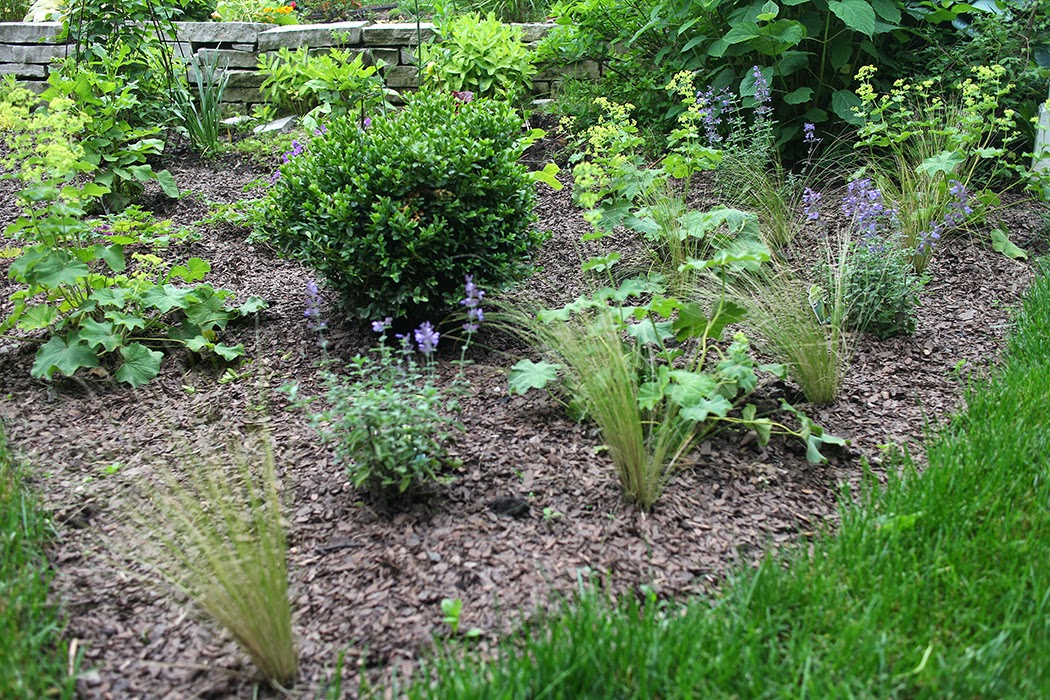 Lady's mantle, Mexican feather grass, Walker's Low nepeta, boxwood