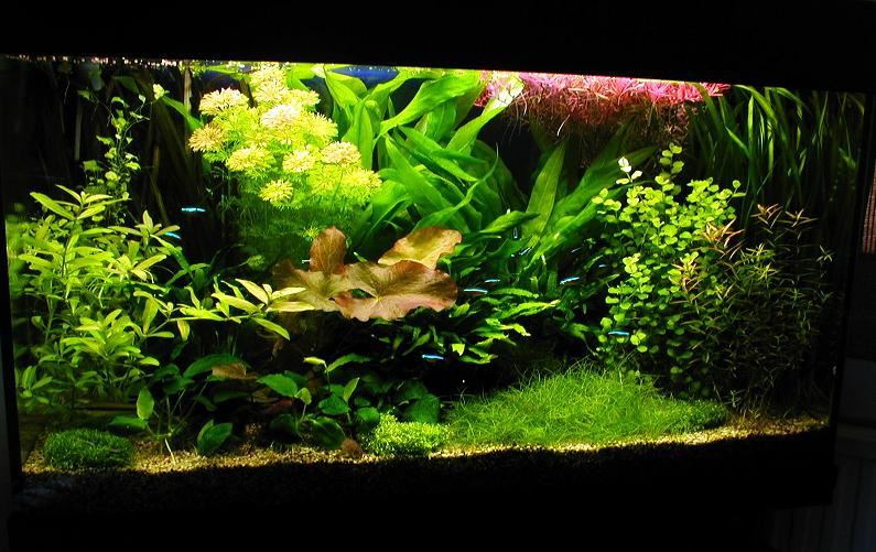 Dutch Planted Aquascaping Designs