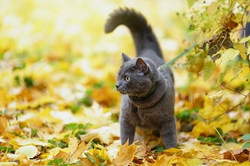 Kot na spacerze
