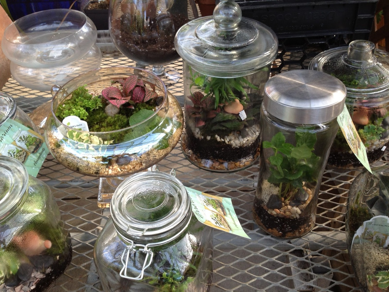 Indoor Garden Center Indoor gardening fun how about a terrarium mark saidnaweys you can visit your local garden center and purchase all the materials you need to make your own little garden dome workwithnaturefo