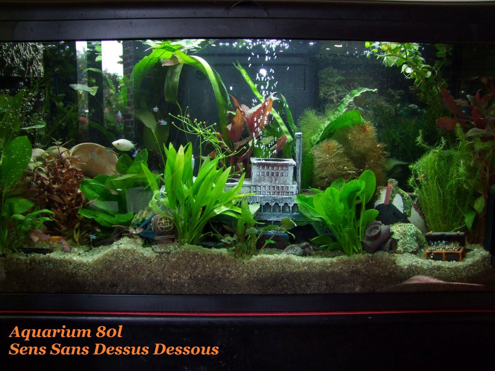 Sens sans dessus dessous s quence aquarium for Aquarium a la maison