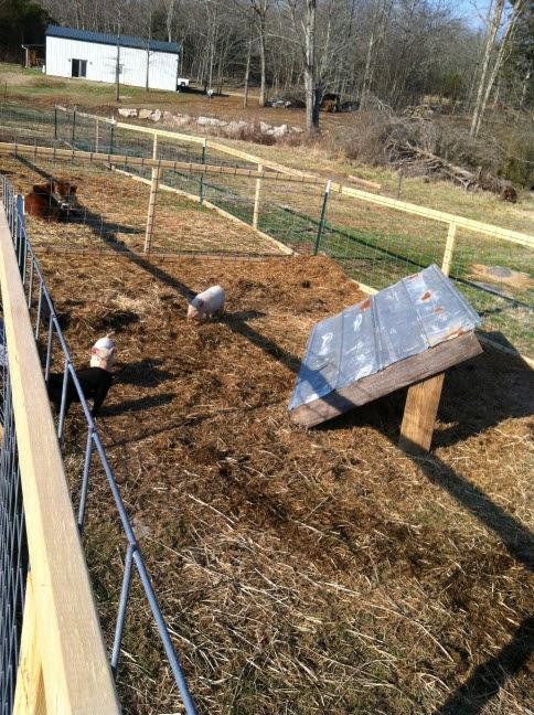 Best Pig Shelter : Homestead catholic building a portable pig shelter