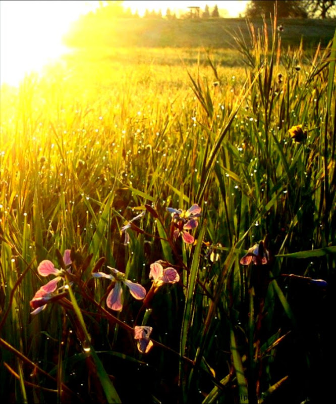 Sunrise in a Meadow 2 by FaFpNd on DeviantArt