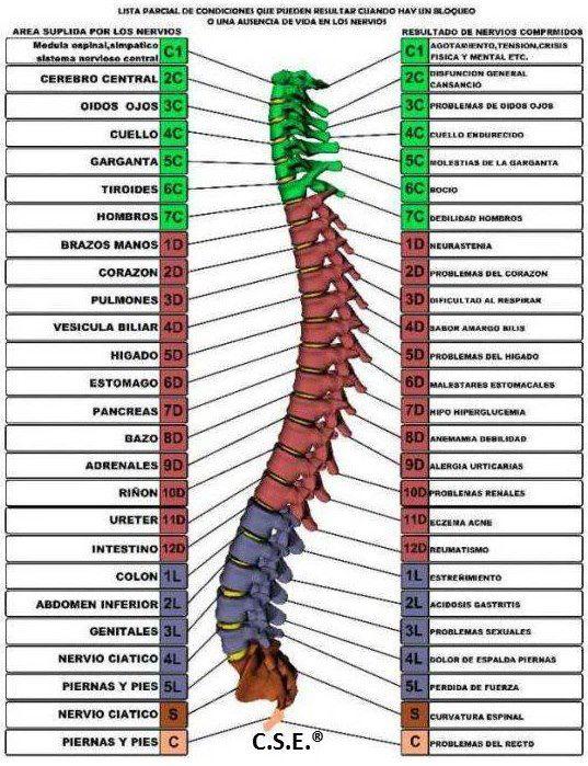El tratamiento por la grasa de caballo de la osteocondrosis