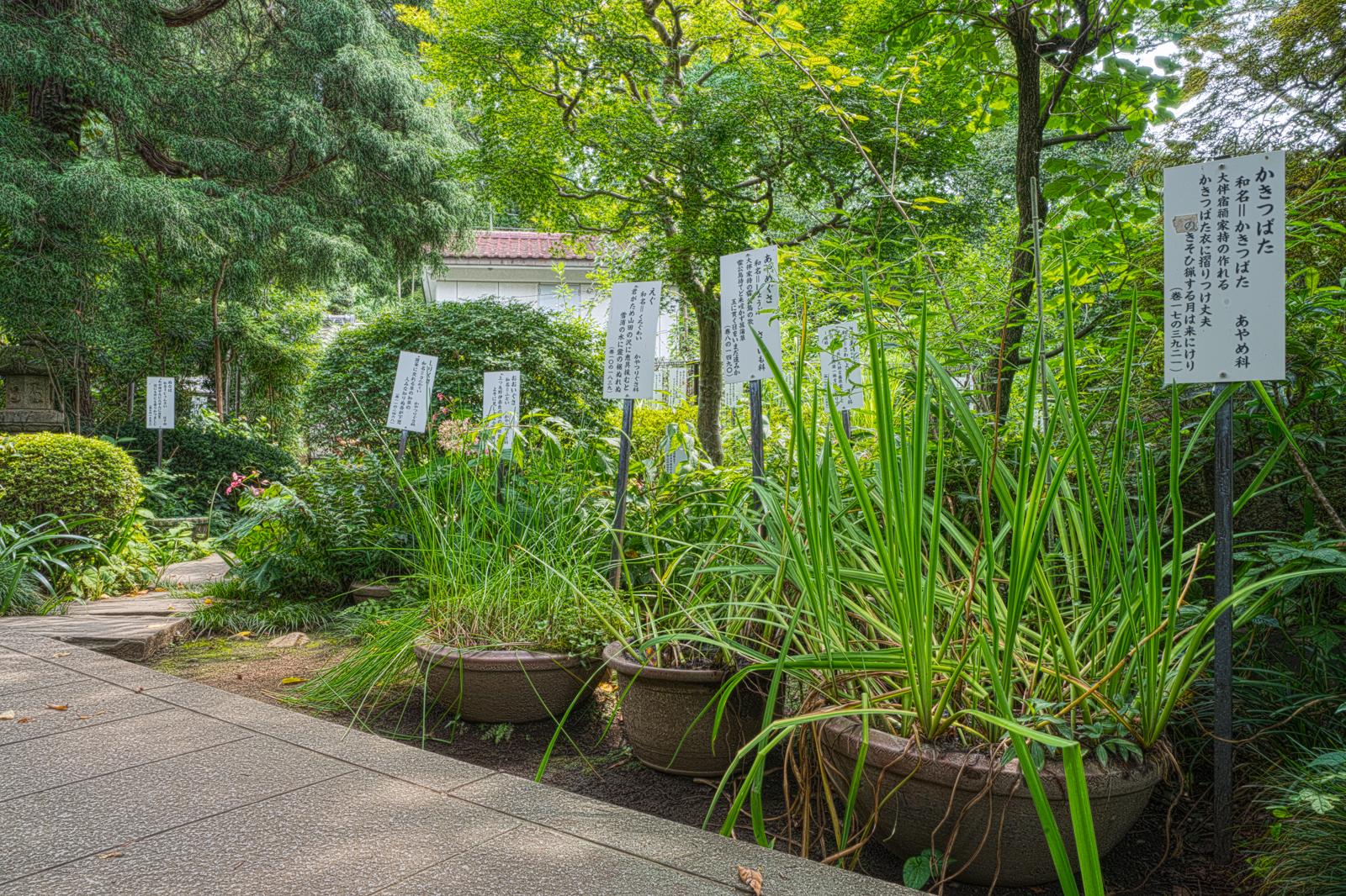 武蔵国分寺、万葉植物園の写真
