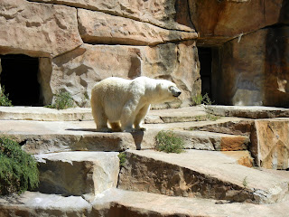 White polar bear at the Henry Vilas Zoo in Madison, Wisconsin
