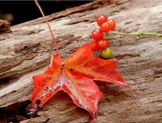 Stances à l'automne