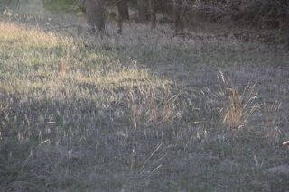 photo of grasses in early Spring sunlight