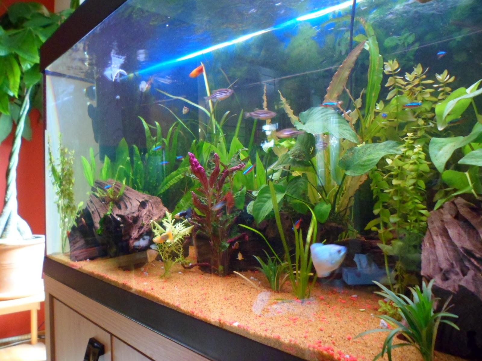 My Fish Tanks: Tuesday - Friday (Days 1 - 4)