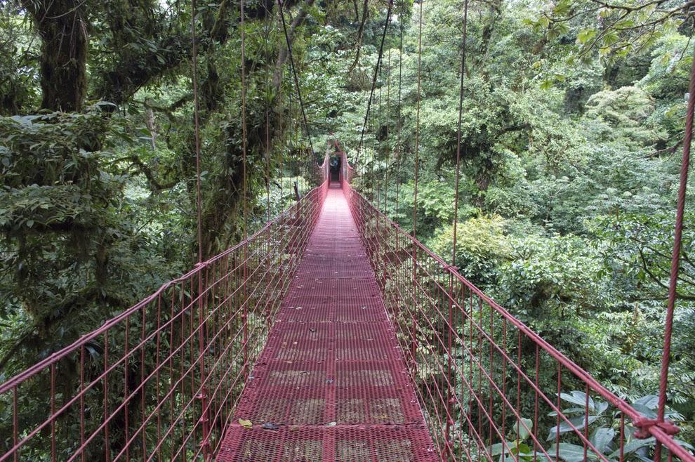 20 lugares que deberías visitar en Latinoamérica, Reserva Biológica Bosque Nuboso de Monteverde, Costa Rica