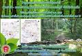 ป่าชุมชนเฉลิมพระเกียรติป่าโคกท่าสี