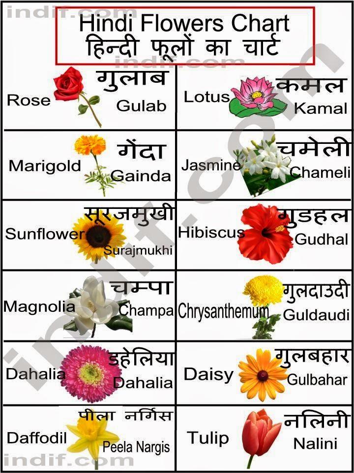 HIBISCO MINHA FLOR FAVORITA-मेरा पसंदीदा फूल हिबिस्कुस