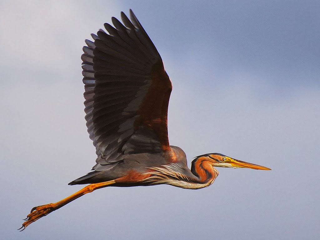 how to photograph a flying bird