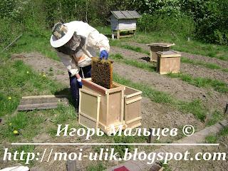Переставляем рамки из пчелопакета