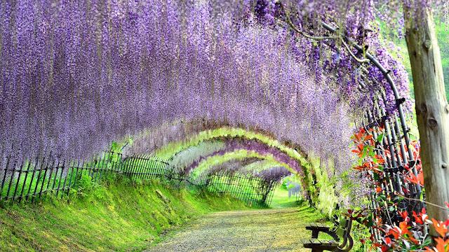 Kawachi Fuji Garden (Fukuoka)