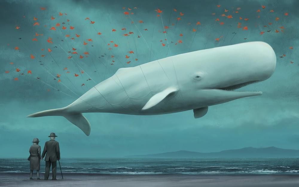 Albino Sperm Whale
