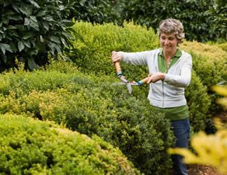 Plantas y flores plantas especies plantas perennes - Arbustos perennes para jardin ...