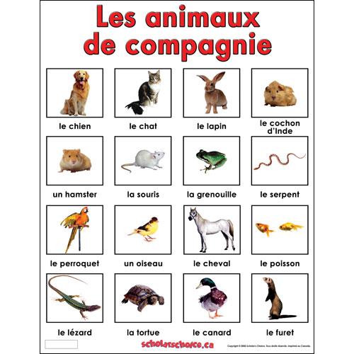 Bonjour 7palmas marzo 2015 - Image animaux gratuite ...
